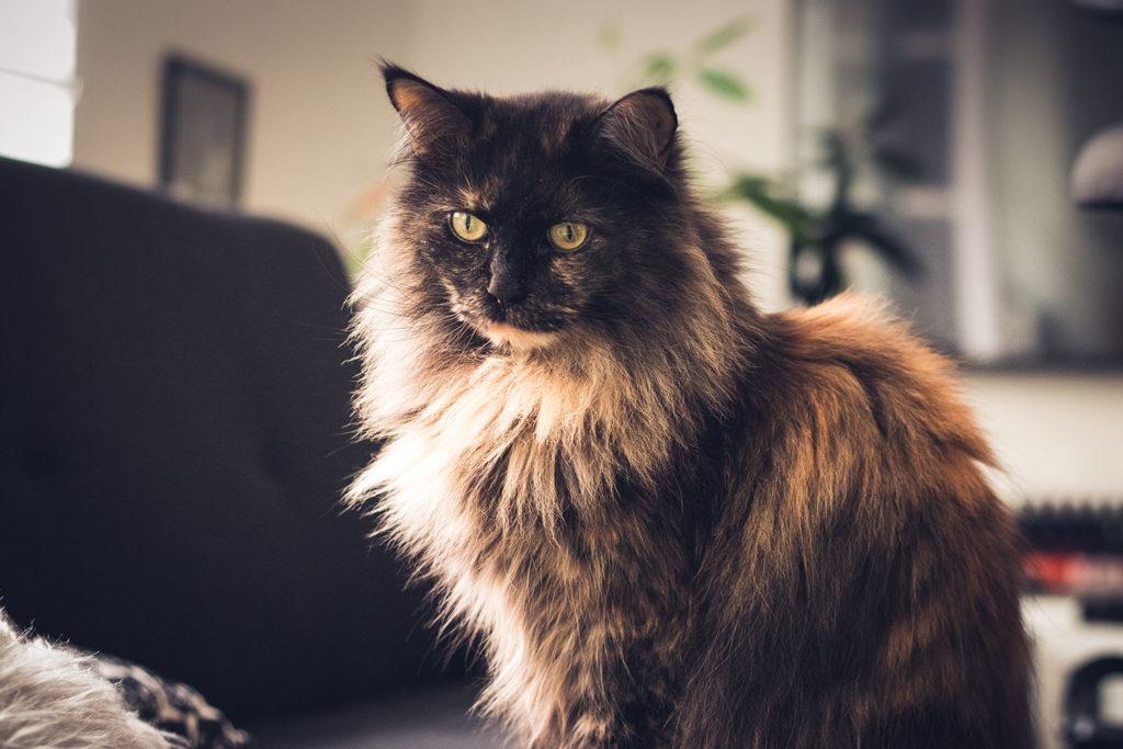 Jinx Katze